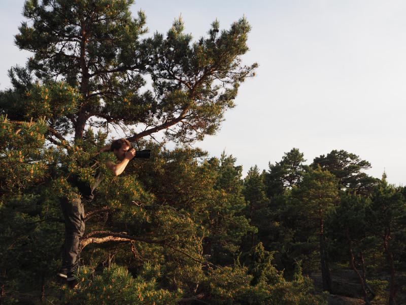 Husfotograf i trädtopparna